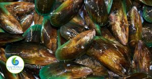 green lipped mussel for arthritis and inflammation