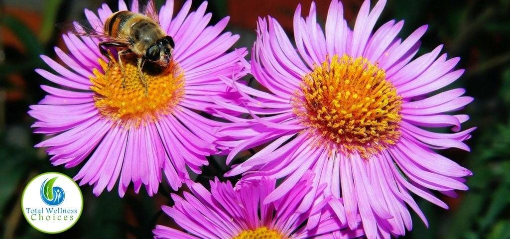bee pollen health benefits for men